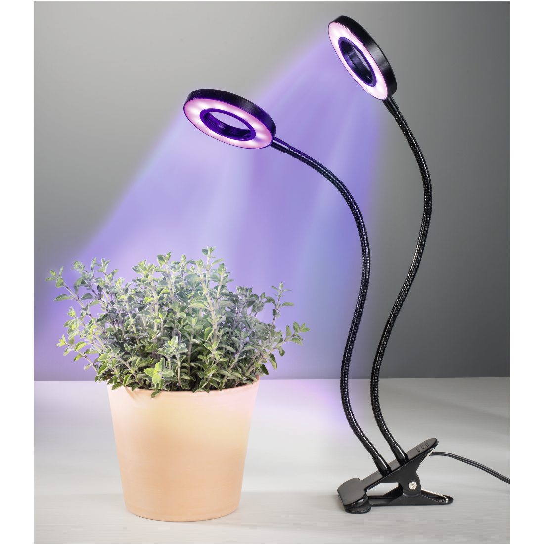 abx2 High-Res Image 2 - Xavax, Circle LED Plant Lamp